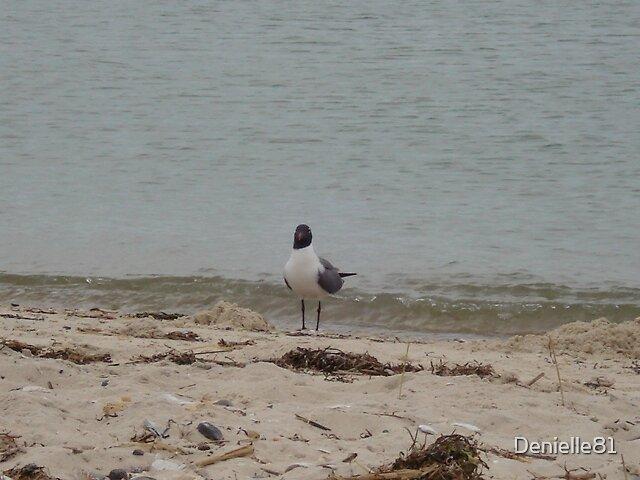 Seagull by Denielle81