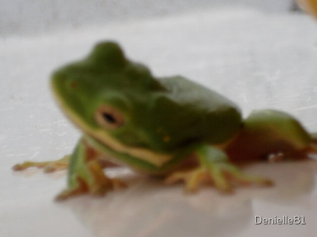 Green Frog by Denielle81