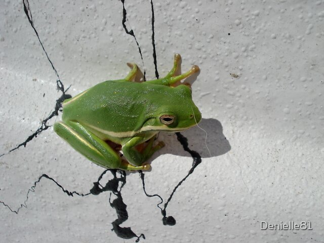 Tree Frog by Denielle81