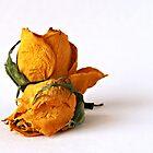 Yellow Roses by Simon Deadman