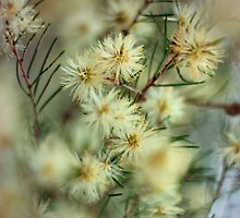 Currimundi Blooms by AdamDonnelly