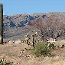 Arizona Cemetary  by Trace Lowe