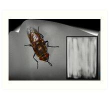 Fly Upon The Wall Art Print