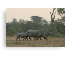 Keeping It Close, Rhino Close Canvas Print