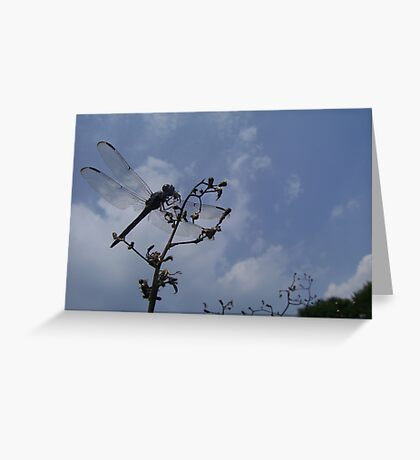 Dragonfly in Drought Greeting Card