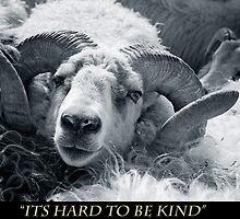 Sheep by Hjalti Hjartarson