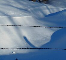 February Barbed by WildThingPhotos