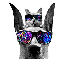 cat sunglasses dog by jneves