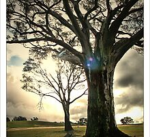 tree of life by Andrew Cowell