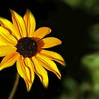 Daisy Entering the Green Zone by heatherfriedman