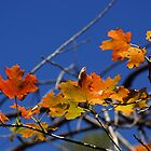 Farewell Autumn 2014 by Loree McComb