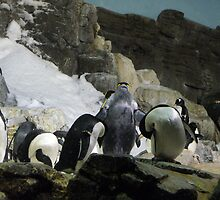 Penquins by peano12