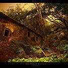 The Faith Woods by José Ramos