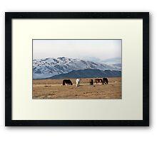 Grazing Ponies Framed Print