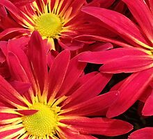 Mums the Word by AshleyPaynter