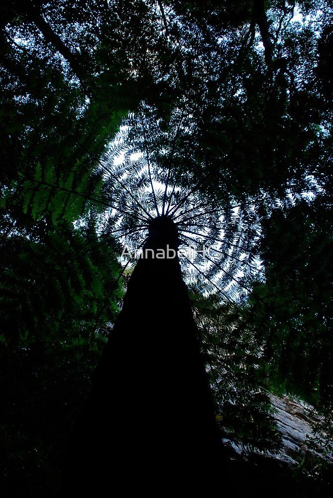 Tree Fern by AnnabelHC