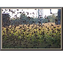 The Field Of Wings Photographic Print