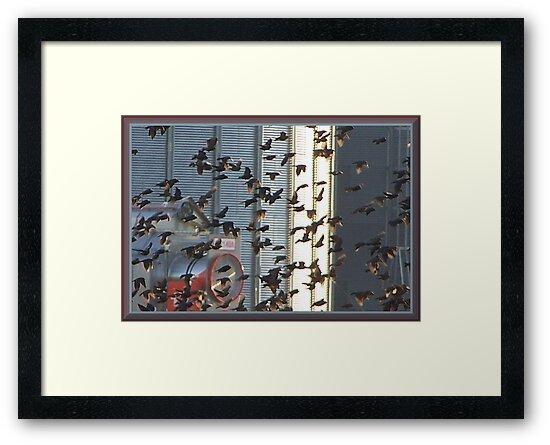 Frantic Fliers by Starr1949