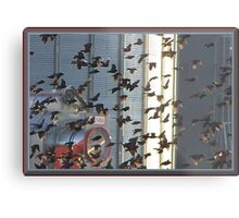 Frantic Fliers Metal Print