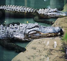 Crocs by Cherie Betts