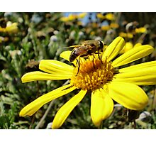 Bumble Bee II Photographic Print