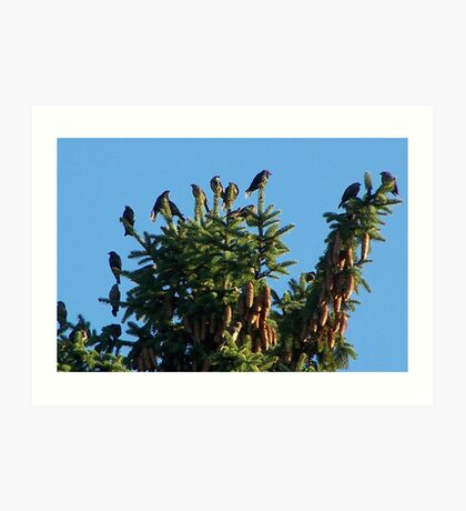They Crowned the Pine Trees Art Print