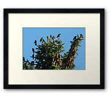 They Crowned the Pine Trees Framed Print