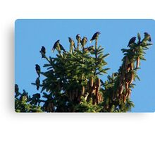 They Crowned the Pine Trees Canvas Print