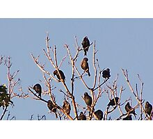Decorated Tree Tops Photographic Print
