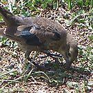 The Odd Bird 2 by Starr1949