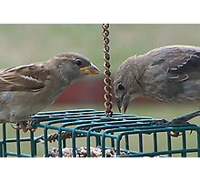 They Mingled with Sparrows Photographic Print
