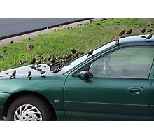 Hood Ornaments and Roof Too Photographic Print