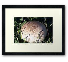 Puff Ball Fungus Framed Print