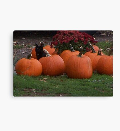 Keeper of the Pumpkins  Canvas Print