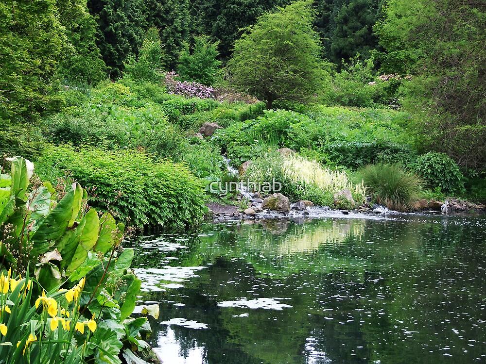 garden by cynthiab