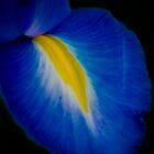 Iris by Judy Harland