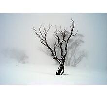 The Snow Tree Photographic Print