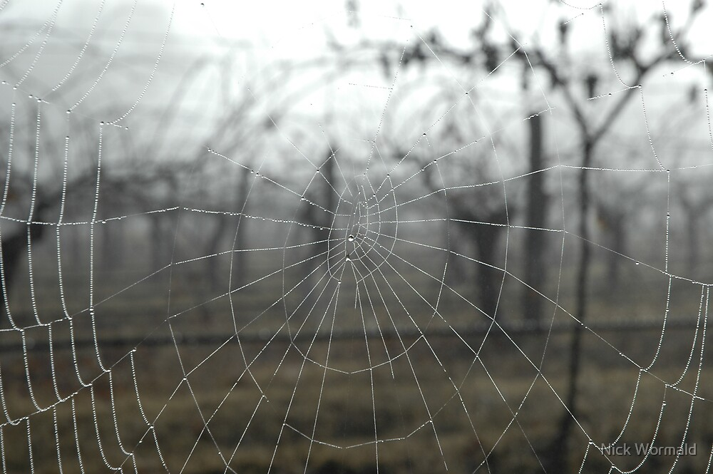 Web in the Vineyard by Nick Wormald
