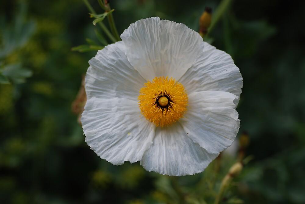 flower5 by ukgun