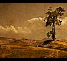 The Boonah Road by Jeff Davies