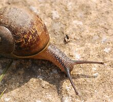 snail by ukgun
