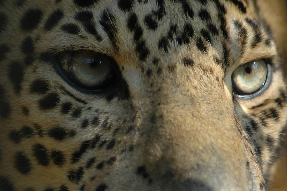 the eyes by utkarsh68