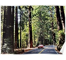 Redwood Byway in Humboldt County Poster