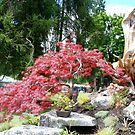 Beautiful  Point Defiance Park Japanese Gardens  by MsLiz