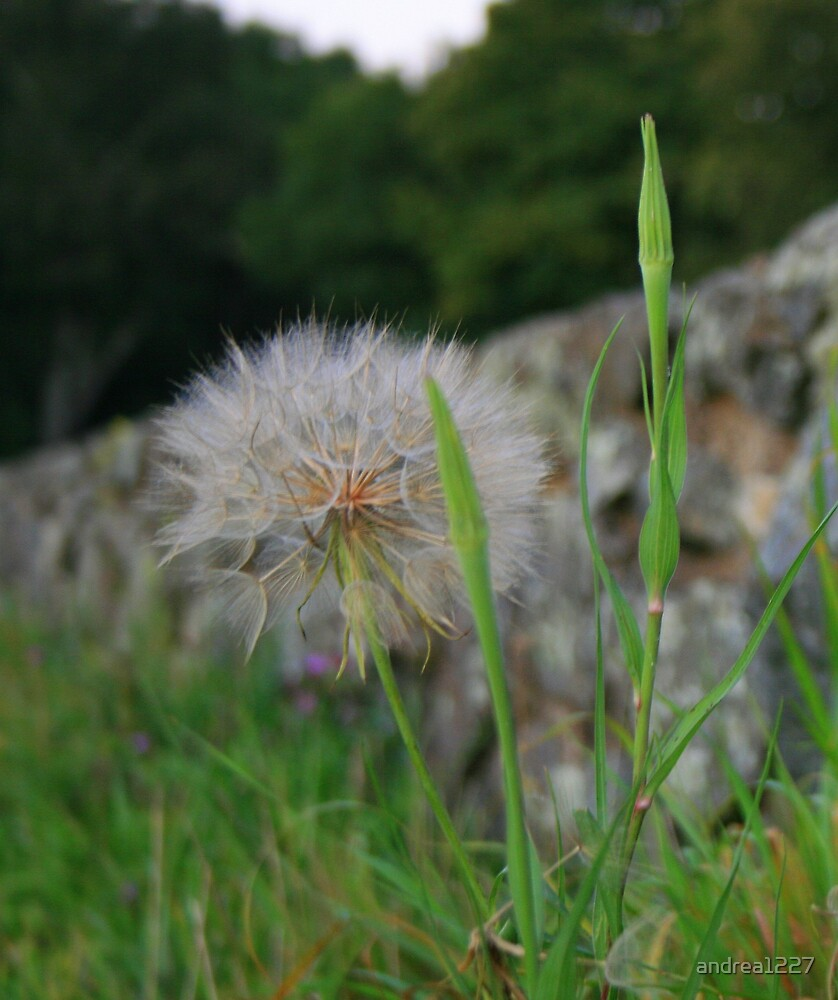 In The Breeze... by andrea1227