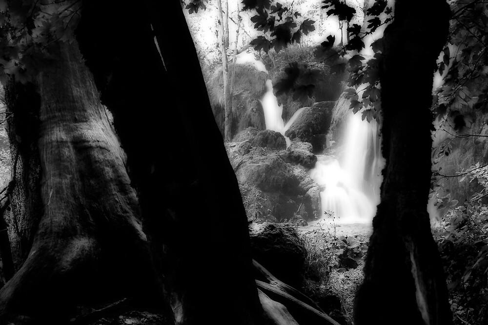 Plitvice by Stephen Jackson