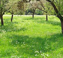 Orchard by Walter Quirtmair
