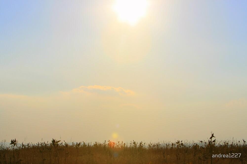 Sunny Field by andrea1227