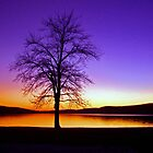 Purple Sunset by patti4glory