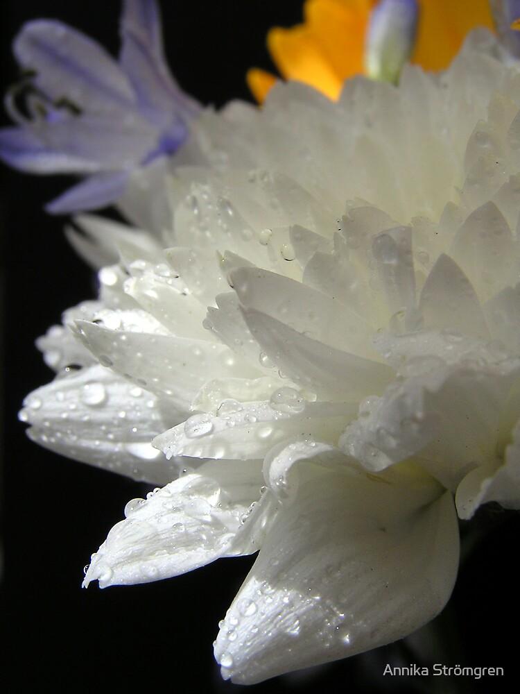 White beauty by Annika Strömgren